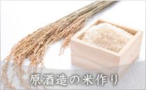 原酒造の米作り